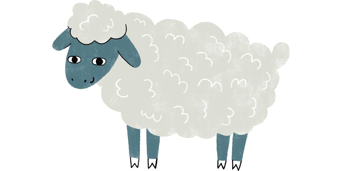 illustration of Sherbert the Sheep